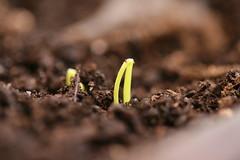 seeds 6
