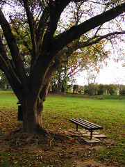 Loneliness !!! (A_sad) Tags: show park pakistan flower tree race garden bench course karachi lahore islamabad asad