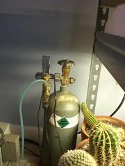 CIMG1809 (runrun02864) Tags: cactus film water cacti technology deep culture hydroponics nft nutrient pereskiopsis