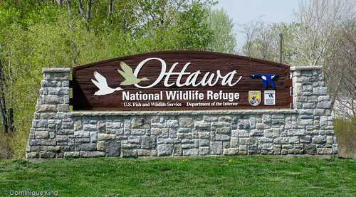 Ottawa National Wildlife Refuge, Ohio-1