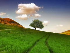 Beautiful world (ceca67) Tags: sky cloud tree green switzerland spring path theworldwelivein supershot imagepoetry mywinners specialtouch platinumphoto goldstaraward saariysqualitypictures updatecollection finestimages magicunicornverybest magicunicornmasterpiece dragondoggeraward eotexcellence