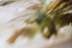Aquarium - Undine - Aktion: Glas Wasser Wrfel ~ Glass Cube Water - im Wasser Spiegel - in the Mirror (hedbavny) Tags: vienna wien reflection art film water glass analog 35mm aquarium austria mirror sterreich lomo lomography wasser spiegel kunst diary pflanze note diana cube mementomori analogue bachmann rotten transition root decomposition blatt spiegelung tagebuch glas wrfel aktion wurzel vanitas unterwasser undine verfall leafe verwelkt aquaticplant notiz radix wasserpflanze hydrophyte wasserspiegel bergang ingeborgbachmann aktionismus scheintod cmwdgreen transitio aquarienpflanze dianamini hedbavny ingridhedbavny