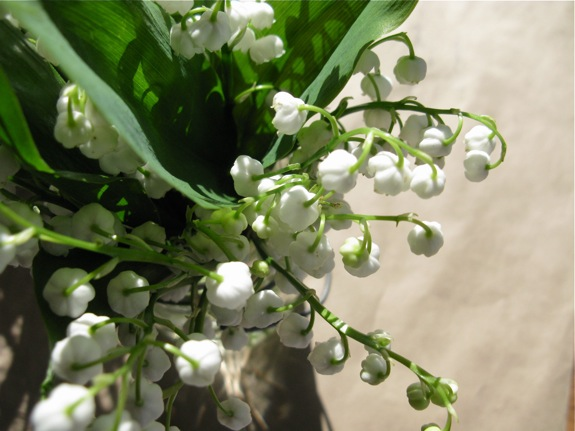 sunny lily of the valley 002
