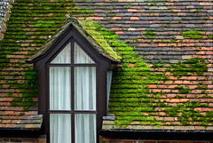 """2008_366052 - Roof Moss and Window • <a style=""""font-size:0.8em;"""" href=""""http://www.flickr.com/photos/84668659@N00/2281241783/"""" target=""""_blank"""">View on Flickr</a>"""
