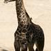 Los Angeles Zoo 053