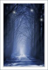 Ice Forest (♥ Damona-Art •.¸¸.•´¯`•.♥.•´¯`) Tags: morning blue trees light ice leuven photoshop woods nikon raw belgium surrealism explore fantasy mystical forests sunbeams d300 bookofsecrets diamondclassphotographer flickrdiamond thesecretlifeoftrees