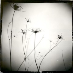 Dead nature. (candido baldacchino) Tags: camera holga 120s