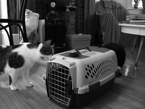 new cat 1