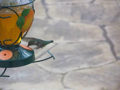 Oriel bird food recipe