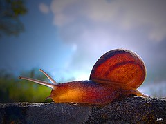 Mi primer caracol (Jabi Artaraz) Tags: beautiful spain bravo europa europe sony beautifullight bilbao zb 500views bec 500faves bizkaia vizcaya bilbo basquecountry caracol 1000views pasvasco naturesfinest beautifulearth barraskiloa 3000views digitalcameraclub supershot 100faves 200faves 1000vistas euskoflickr ar1 150faves outstandingshots 35faves bej totalphoto fineartphotos specanimal golddragon flickrcolour mywinners abigfave 300faves superaplus aplusphoto flickrbest impressedbeauy 400faves diamondclassphotographer flickrdiamond excellentphotographerawards theunforgettablepictures excapture themacrogroup macromarvels theperfectphotographer heunforgettablepictures 20tfanimales jartaraz flickrestrellas natureselegantshots qualitypixels alemdagqualityonlyclub llovemypics magicdonkeysbest caracolmiricol 3000vistas bderechosdeautorauthorscopyrightbjabiartaraz bestofblinkwinners blinksuperstars