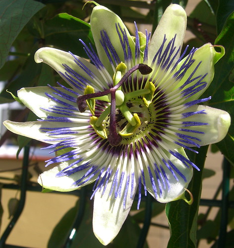 passion flower tattoo. They used japanese flower tattoos, Japanese dragon