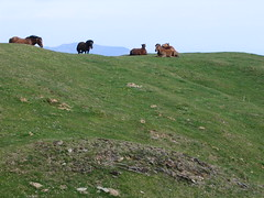 "Horses • <a style=""font-size:0.8em;"" href=""http://www.flickr.com/photos/48277923@N00/2620366011/"" target=""_blank"">View on Flickr</a>"