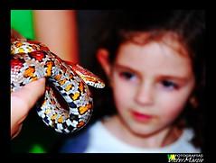 Corn Snake (Victor Mrcio) Tags: parque verde corn olhar nikon minas gerais snake vale criana 18135 vianopolis d40x
