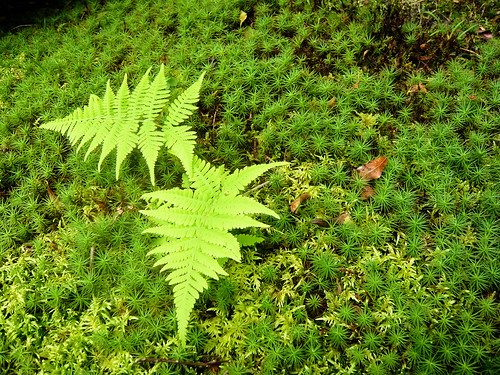 Yoshikien Garden, Nara - Fern and moss