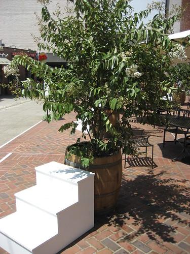Wish Tree in Pasadena - 12