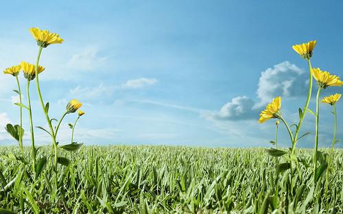 フリー画像| 自然風景| 草原の風景| 平原の風景| たんぽぽ/タンポポ|       フリー素材|