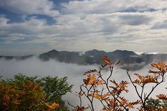紅葉と雲海と