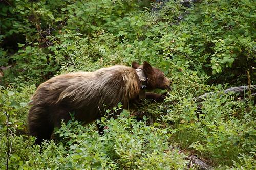 black bear- check!!!