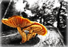 ***mushrooms*** (G.Hotz Photography (busy as a bee =)) Tags: portrait people food lake photography dornbirn feldkirch österreich stillleben foto fotograf fotografie hard bregenz gerald photograph bodensee constance bludenz oesterreich vorarlberg produkt hotz hochzeitsfotograf ondarena fotolyst
