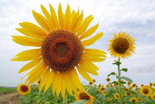 20080824 Flower Garden YOSAMI 4