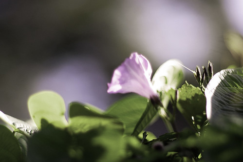 """Nobody sees a flower really; it is so small. We haven't time, and to see takes time - like to have a friend takes time."""