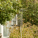 susan campbell hummingbird banding_8792