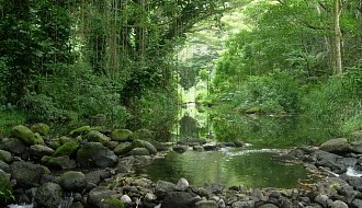 Green within the Waipi'o Valley