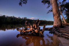 Even In The Quietest Moments (Garry - www.visionandimagination.com) Tags: reflection tree art nature water creek river landscape gallery oz australia shore stump worlds everglades eucalyptus root aus mangroves estuarine flickrsbest worldbest anawesomeshot worldsartgallery wwwvisionandimaginationcom