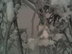 Frozen fennel