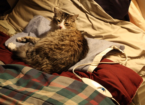 cat georgethecat canonefs1785mmf456isusmlens heatedpad