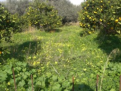 bed of clover fournes hania chania