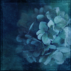 Hydrangea (~J0~ (away)) Tags: uk blue flower square textures norwich hydrangea thebelljar hourofthesoul