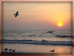 morning rally (shelley1968) Tags: ocean seagulls beach sc birds sunrise waves follybeach