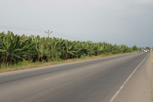 Ecuadorian Banana Territory!