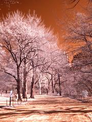 Central park (mehrirae) Tags: nyc trees ir centralpark