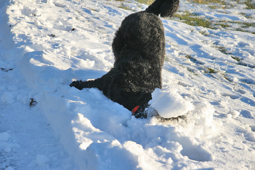 skippy under the snow