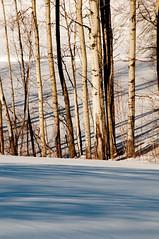 light and shadow (nosha) Tags: trees winter snow nature beautiful beauty landscape nikon december january birch f18 2008 2009 lightroom d300 200mm nosha 18200mmf3556 december2008 nikond300 noshalikes
