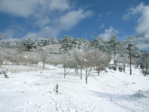 Oyasan Alps Land