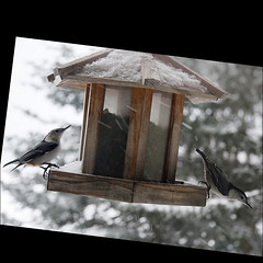 Its cold out there... (NaPix -- (Time out)) Tags: winter snow canada birds landscape image bokeh feeder explore nuthatch explored explorefrontpage imagepoetryimageposie animalsbeautifulanimals napix littlestorypicswithsoul creativeframeofmind