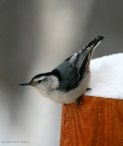 nuthatch launch