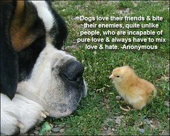 The World S Best Photos Of Dogquotes And Quotes Flickr Hive Mind