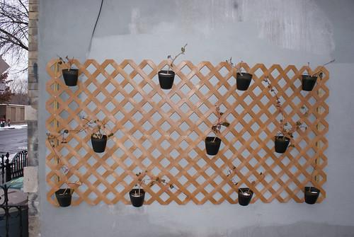 DSC00092.JPG Reductionist Garden