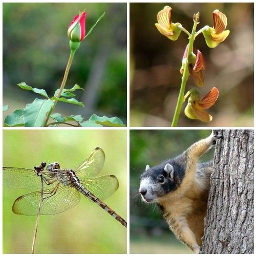 Flowers and critters