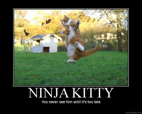 ninja-kitty