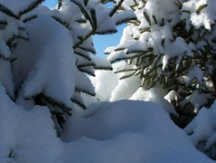 Gratitude (Lily C.) Tags: blue winter sky snow canada cold forest hiver bluesky newbrunswick neige froid lilyc