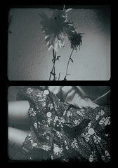 (slightly) dead already (photomaton & vox) Tags: diptych sinking lostthings dyingthings
