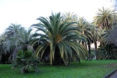botanico 202 (blum1) Tags: cactus botanico ortobotanico