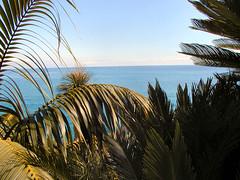 Bordighera, Liguria - Italy (dreamysoul) Tags: cactus italy italia liguria palmtrees palme bluesea bordighera pallanca piantegrasse exoticgarden marligure cactee giardinoesotico mareblu italiansea mareitaliano