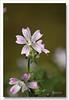 Flores silvestres (miguel68) Tags: cruzadasgold