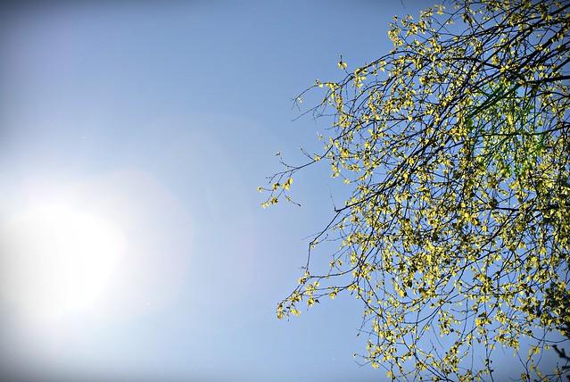 kevät 077